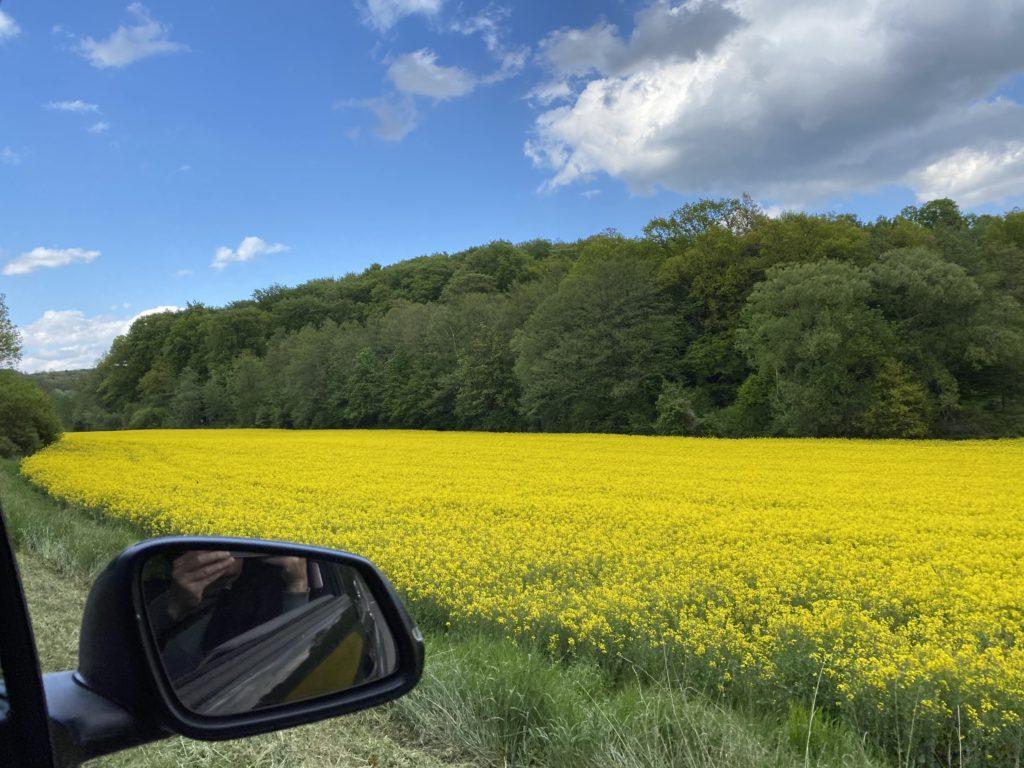 gelbes Feld im Spiegel
